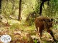 The only known wild jaguar currently in the United States is seen in an undated still image from video captured on a remote sensor camera in the Santa Rita Mountains near Tucson, Arizona, released by Conservation CATalyst and The Center for Biological Diversity.    REUTERS/Conservation CATalyst and Center for Biological Diversity/Handout via Reuters