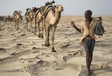 A man walks with his camels through the Danakil Depression, northern Ethiopia April 22, 2013. REUTERS/Siegfried Modola