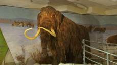 Scientists seek to revive woolly mammoth