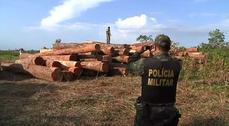 Cops and loggers in the Amazon rainforest