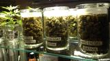 Legal weed no a-pot-calypse: Colorado governor
