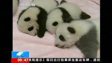 China shines a spotlight on panda cubs