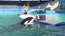 Controversy shrouds captive killer whale in Miami