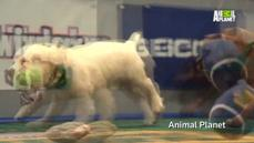 Puppy Bowl tops this week's animal rou