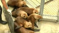 Sea lions injured in chlorine attack return to ocean