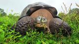 Worst job ever? Sifting tortoise dung for science