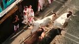 Running of the Bulls leaves several injured