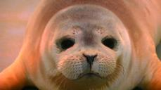 Two baby seals rescued and taken in by Belgian marine park