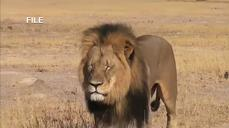 US man accused of killing famous African lion
