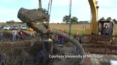 Woolly mammoth unearthed in Michigan field