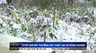Vietnamese farmers struggle in cold snap