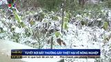 Vietnamese farmers struggle in cold snap