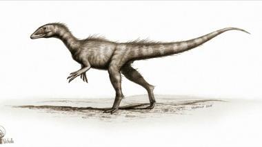 New dinosaur species offers evolutionary clues