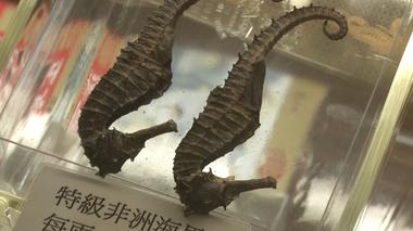 Chinese medicine shops feel the pinch