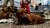 China's dog meat festival ripe for the chop: activists