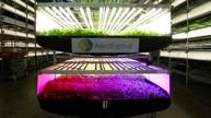 Vertical farming: eliminating growing seasons, supporting locals