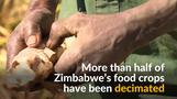 Millions need aid as Zimbabwe battles drought