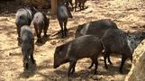 Venezuela's zoo animals starving under food shortages