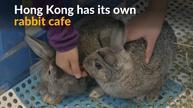 Hong Kong's first rabbit cafe