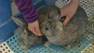 Bunny tails at Hong Kong cafe, zoo animals get check-ups