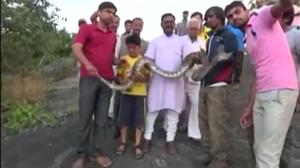 Man attacked by python while taking selfie
