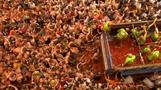 Revellers hurl tomatoes at each other in Spanish festival