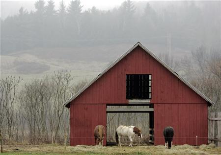 Horses feed outside their barn on a foggy day in Vermont, November 28, 2006. More than 20 Vermont towns passed resolutions on Tuesday seeking to impeach President Bush, while 13 towns in the tiny New England state called on Washington to bring U.S. troops back from Iraq. REUTERS/Brian Snyder