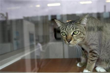 A cat looks out a window in a file photo. U.S. officials said on Friday that melamine, a component found in fertilizers in Asia and which should not be in pet food in any amounts, has been detected in the wheat gluten used by Canada-based Menu Foods. REUTERS/Tim Chong