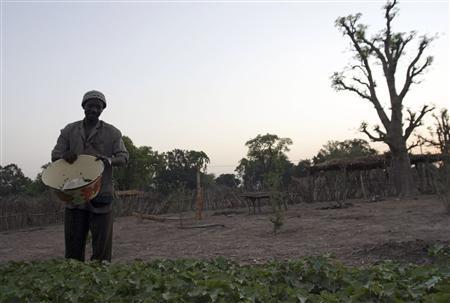 Daouda Doumbia, 53, waters jatropha plants in Simiji, Mali, April 28, 2007. By crushing the seeds of the hardy jatropha plant, long thought to be useless, villagers can power a small generator with its oil, enough to run 40 streetlights and give 60 families power by night. REUTERS/David Lewis