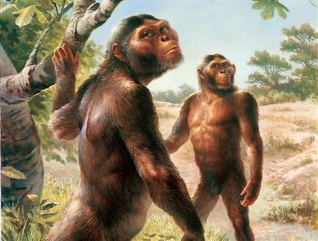 A female (foreground) and male Australopithecus afarensis are seen foraging in an undated illustration. An analysis of thousands of skulls shows modern humans originated from a single point in Africa and finally lays to rest the idea of multiple origins, British scientists said on Wednesday. REUTERS/Michael Hagelberg/Arizona State University Research Magazine/Handout
