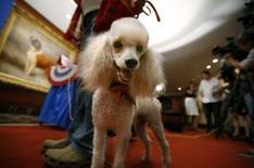 <p>Michelle et Barack Obama ont promis à leurs deux filles d'adopter un chien après l'élection présidentielle du 4 novembre, et selon un sondage du Club canin américain (AKC) mené auprès de 42.000 personnes, c'est le caniche qui correspondrait le mieux à la famille du sénateur de l'Illinois. /Photo prise le 28 août 2008/REUTERS/Brendan McDermid</p>
