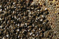 <p>Foto de archivos de abejas, en una granja al norte de Madrid, 14 dic 2006. REUTERS/Susana Vera (SPAIN)</p>
