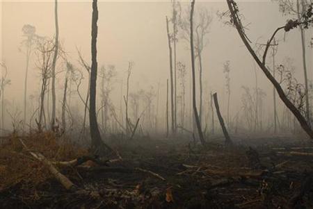 Haze blankets a damaged rainforest in Sampit regency of the Indonesia's central Kalimantan province, October 3, 2007. REUTERS/Hardi Baktiantoro