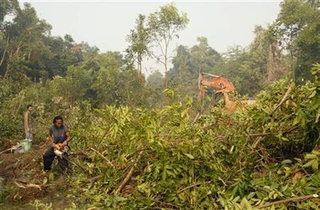 Workers cut timber in a rainforest in Kapuas regency of Indonesia's central Kalimantan province October 3, 2007. REUTERS/Hardi Baktiantoro