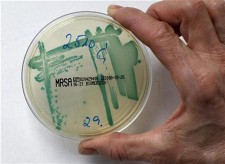 MRSA (Methicillin resistant Staphylococcus Aureus) bacteria strain is seen in a petri dish containing a special jelly for bacterial culture in a microbiological laboratory in Berlin, March 1, 2008. REUTERS/Fabrizio Bensch