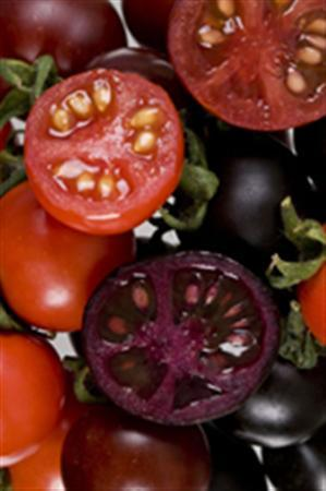A purple tomato in an undated image released by the John Innes Center in Britain. A purple tomato genetically engineered to contain nutrients more commonly seen in dark berries helped prevent cancer in mice, British researchers said on Sunday. REUTERS/Handout