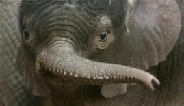 <p>File image shows a baby elephant. REUTERS/Arnd Wiegmann</p>