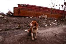 <p>An ownerless dog sits in front of a barge in the Lower Ninth Ward in New Orleans, Louisiana, September 22, 2005. REUTERS/Jessica Rinaldi</p>