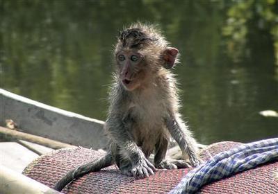 Animal rights group slams Cambodia monkey trade