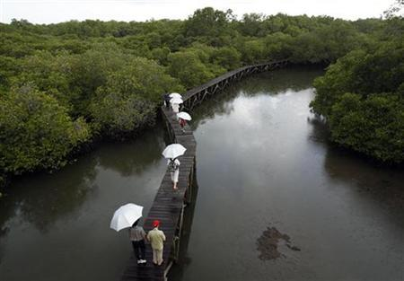 Visitors take a walking tour at a mangrove forest on the Indonesian resort island of Bali December 6, 2007. REUTERS/Yusuf Ahmed Tawil