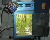 <p>A barley plant experiment is pictured aboard the International Space Station in an undated handout photo released by the State Research Center of the Russian Federation, Institute for Biomedical Problems (IBMP), December 2, 2008. Space Beer, the result of a five-month mission to boldly grow, where almost no one has grown barley before, has landed in Japan. REUTERS/IBMP/Handout</p>