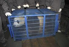 <p>Tuan Tuan, one of two pandas selected as a gift for Taiwan, is put into a cage as it leaves a giant panda centre in Ya'an, Sichuan province December 23, 2008. A pair of giant pandas, Tuan Tuan and Yuan Yuan, left their base in the mountainous southern Chinese province of Sichuan on Tuesday en route for Taiwan, a goodwill gift from Beijing and the latest sign of improving ties. REUTERS/China Daily</p>