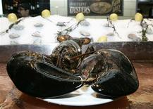 <p>A 20-pound (9 kg) lobster estimated to be 140 years old is seen on the bar at City Crab and Seafood in New York January 9, 2009. The lobster will be released back into the ocean after briefly becoming the mascot for the New York City restaurant, a People for the Ethical Treatment of Animals spokesperson said on Friday. REUTERS/Brendan McDermid</p>