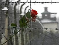 <p>A rose is seen attached to barbed wire at the former Buchenwald Nazi death camp near Weimar in Thuringia April 9, 2005. REUTERS/Fabrizio Bensch</p>