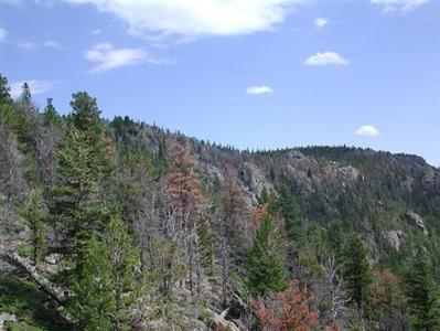Gray, needleless limber pine, the likely victims of drought, interspersed with orange, dead limber and ponderosa pine killed by Rocky Mountain pine beetles in Colorado's Rocky Mountain National Park are seen in this undated handout photo. REUTERS/Jeremy Smith/University of Colorado