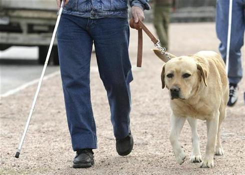 Life of a guide dog
