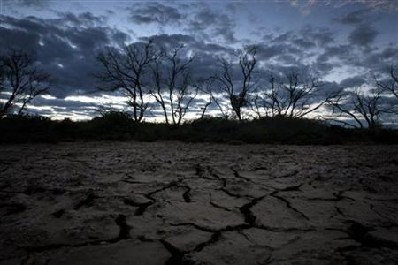 The early morning sky illuminates dead trees and cracked earth on a farm near Kerang, about 360km (224miles) north of Melbourne, August 24, 2007. REUTERS/Tim Wimborne