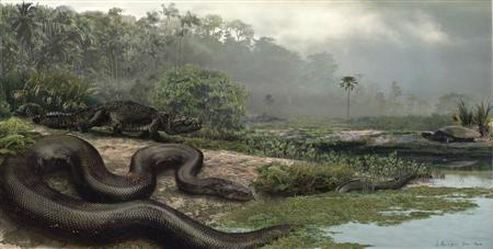This artist's rendering shows the colossal prehistoric snake Titanoboa cerrejonensis, whose remains were found in a Colombian coal mine. This monster was the largest snake ever known to have lived. Titanoboa was at least 43 feet (13 meters) long and weighed 2,500 pounds (1,140 kg), the scientists wrote in the journal Nature. REUTERS/Jason Bourque/
