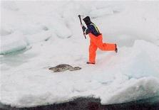 <p>A sealer chases a harp seal with his hakapik on the ice off the northwest coast of Newfoundland, April 11, 2008. REUTERS/Paul Darrow</p>