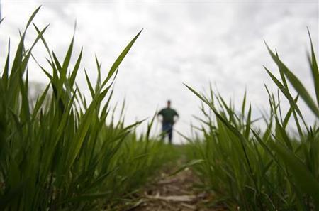 A farmer stands in a wheat field in Lincoln, Nebraska, May 5, 2008. REUTERS/Carlos Barria